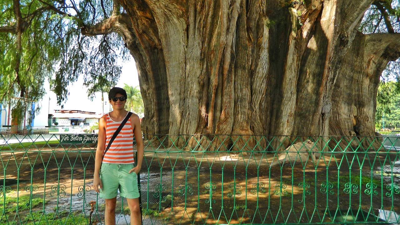 arbol-tree-tule-friendly-gay-travel