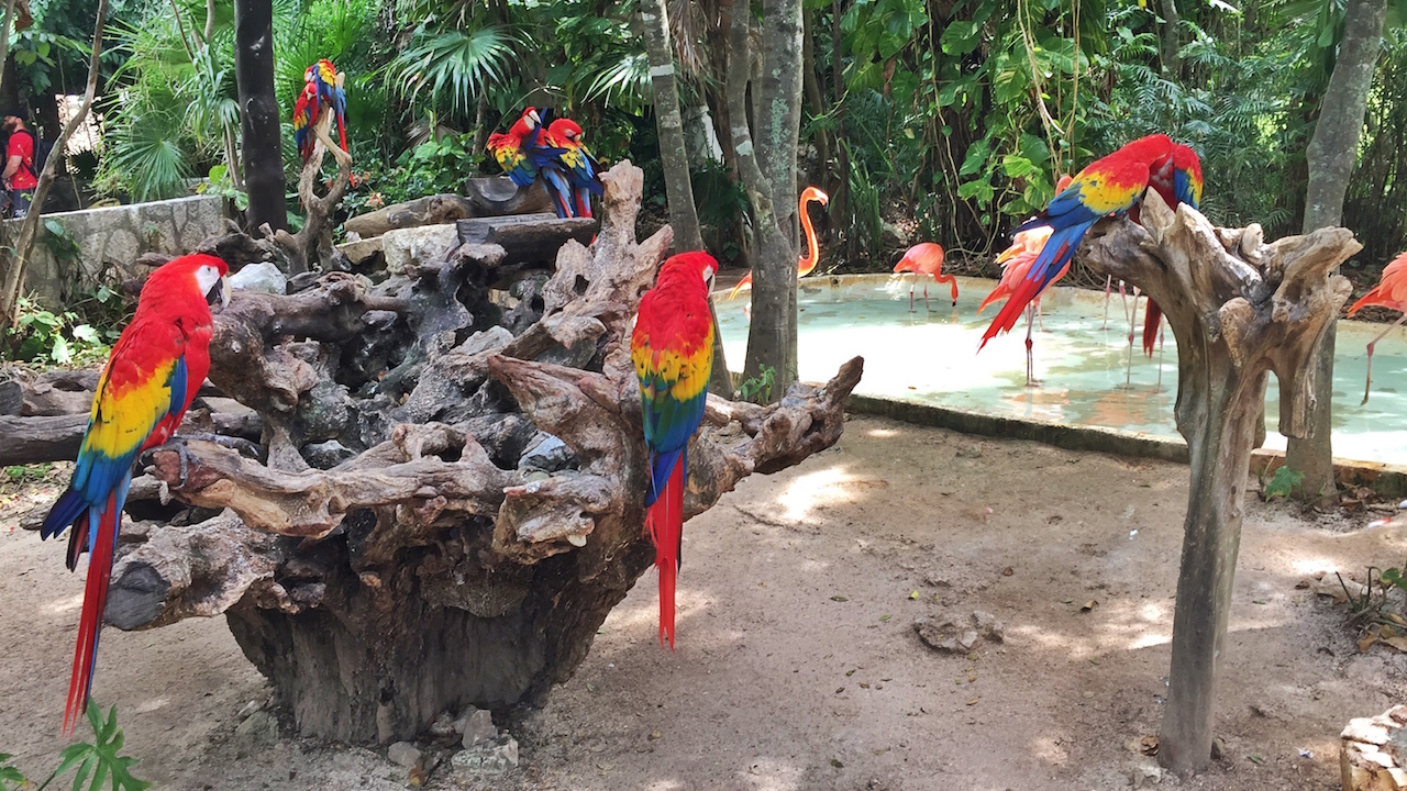 macaws-flamingo-cancun
