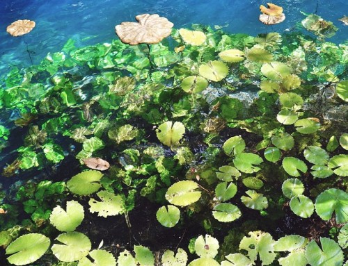 What are Cenotes? Gems in Mexico.