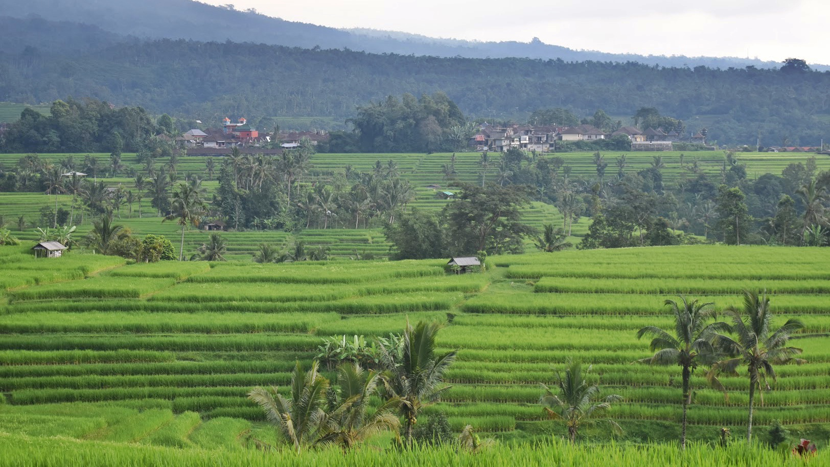 bali-friendly-touring-Jatiluwih-Rice-Terraces