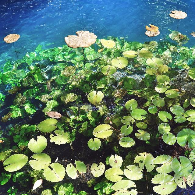 friendly-touring-cenotes-mexico